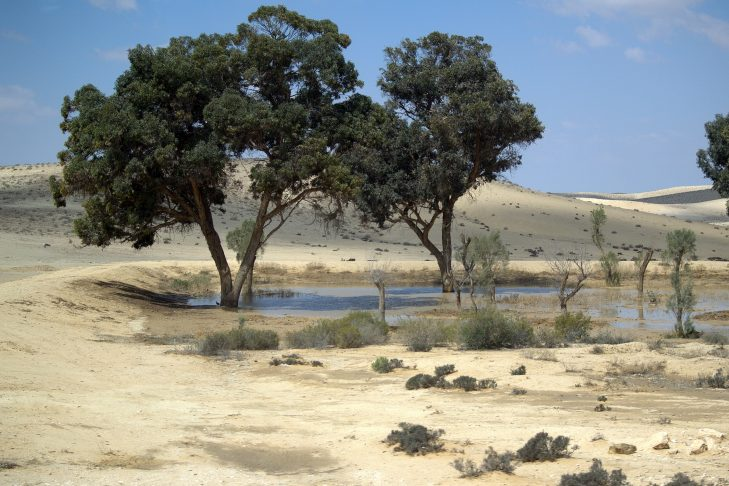 Jewish_National_Fund_trees_in_The_Negev-729x486.jpg