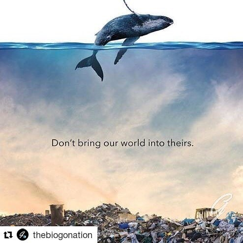 #Repost @thebiogonation (@get_repost) ・・・ A powerful image for an important message.  Plastic takes in excess of 500 years to biodegrade. Over 90% of plastic produced still exists in some form. It litters oceans and fills landfills. One thing is always the same, destruction follows... Do the best you can to lower your plastic usage, there are better alternatives for almost any plastic based product you can think of! Test yourself this year.  #plastic #plastics #protectouroceans #ecolifestyle #greenlifestyle #plasticpollution #wecandobettertogether #smalldecisionsmatter #thebiogonation