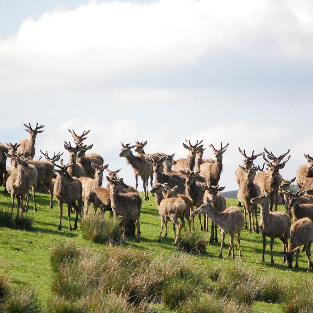Reed Deer