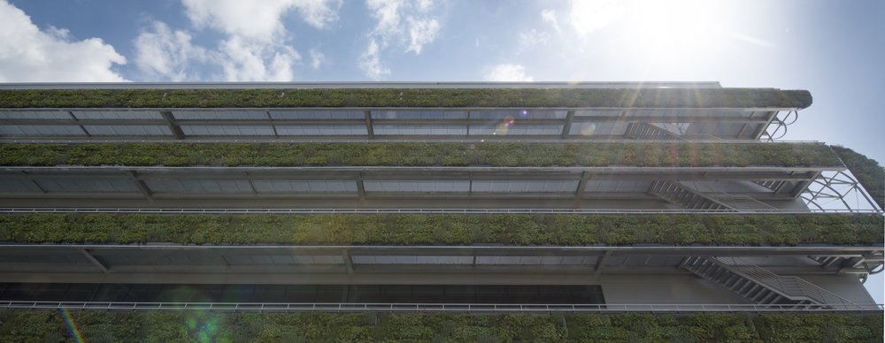 Vertical plant walls in modern architecture