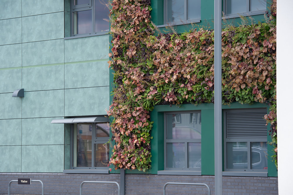 Village Bakery -  Flowering plant wall by Suite Plants
