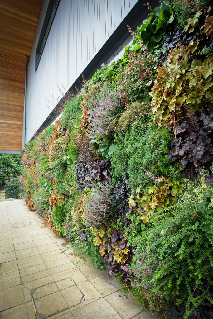 Outdoor plant wall installation