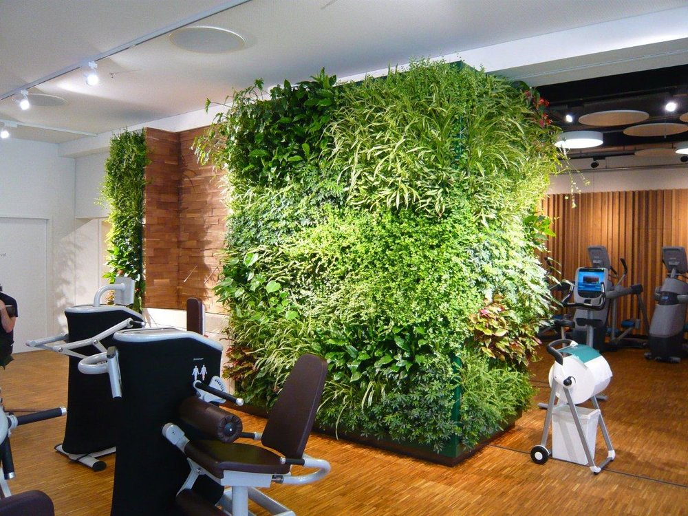 Indoor wall plants for commercial space