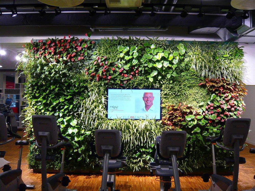 Beautiful plant wall design