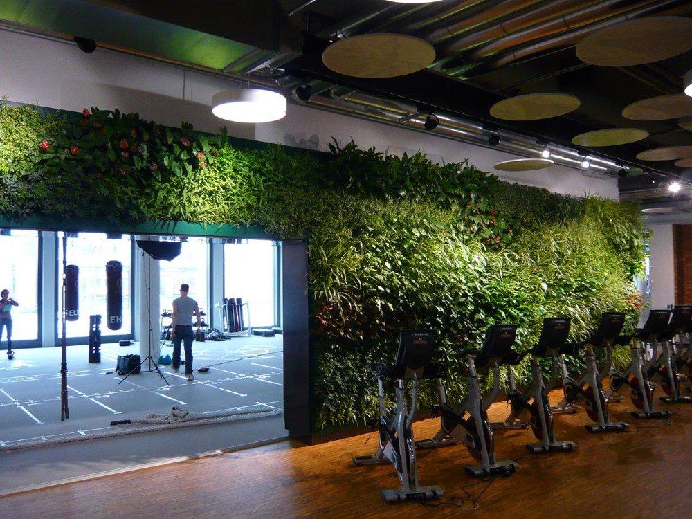 Indoor Garden Wall by Suite Plants