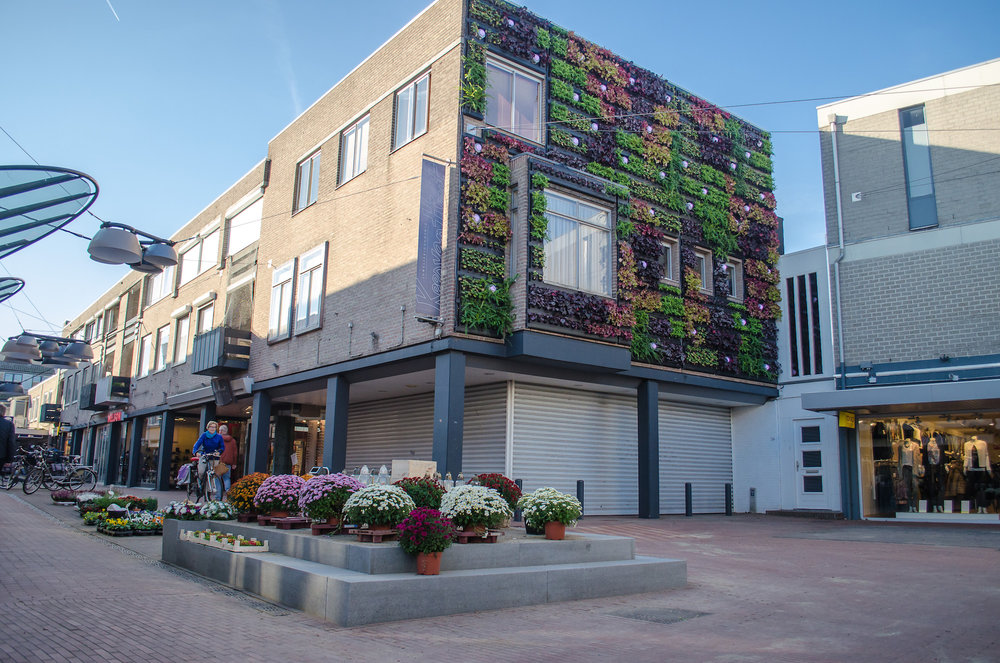 Exterior Green Wall Installation by Suite Plants - Veghel, Netherlands