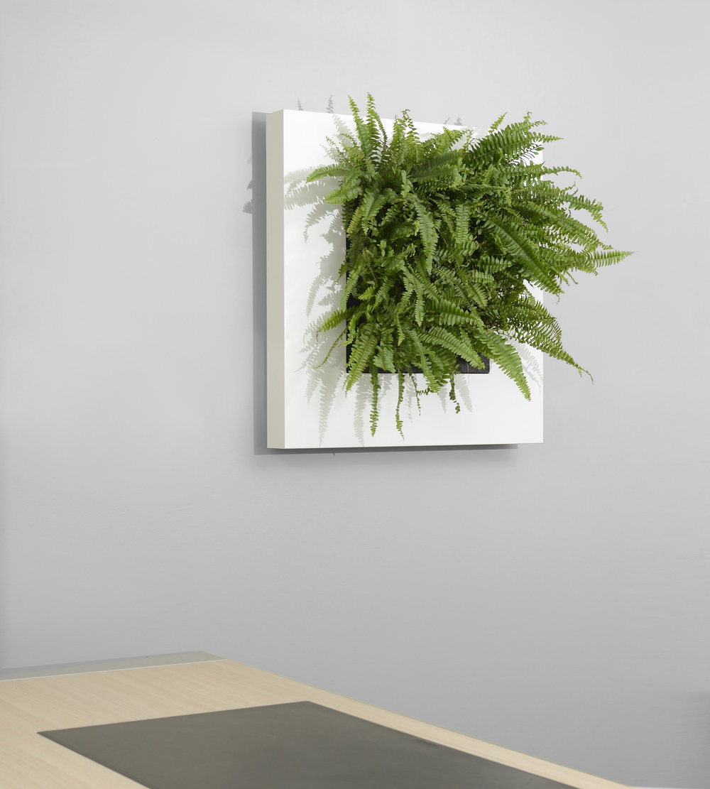 Living picture plant art - Small frame