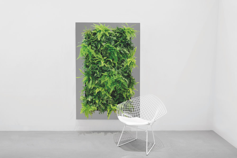 Living Wall Art - Large Frame