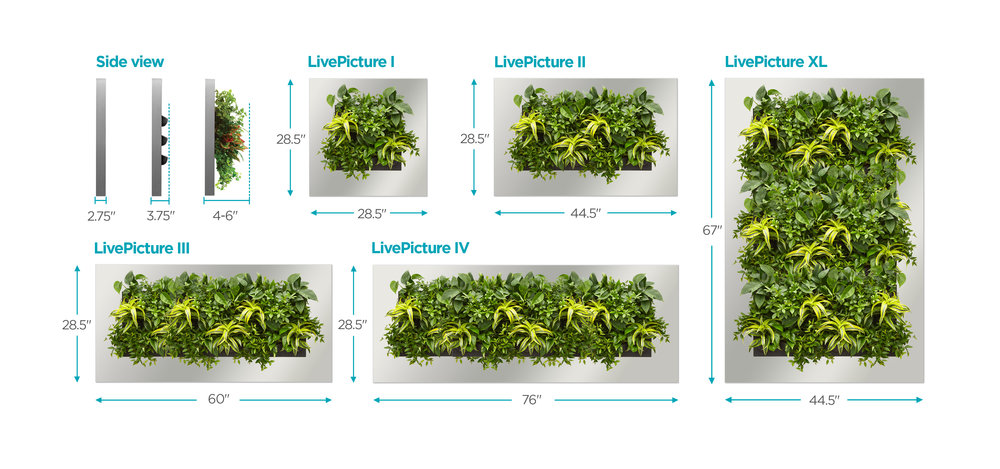 Live Picture Frames for living plants - Various sizes