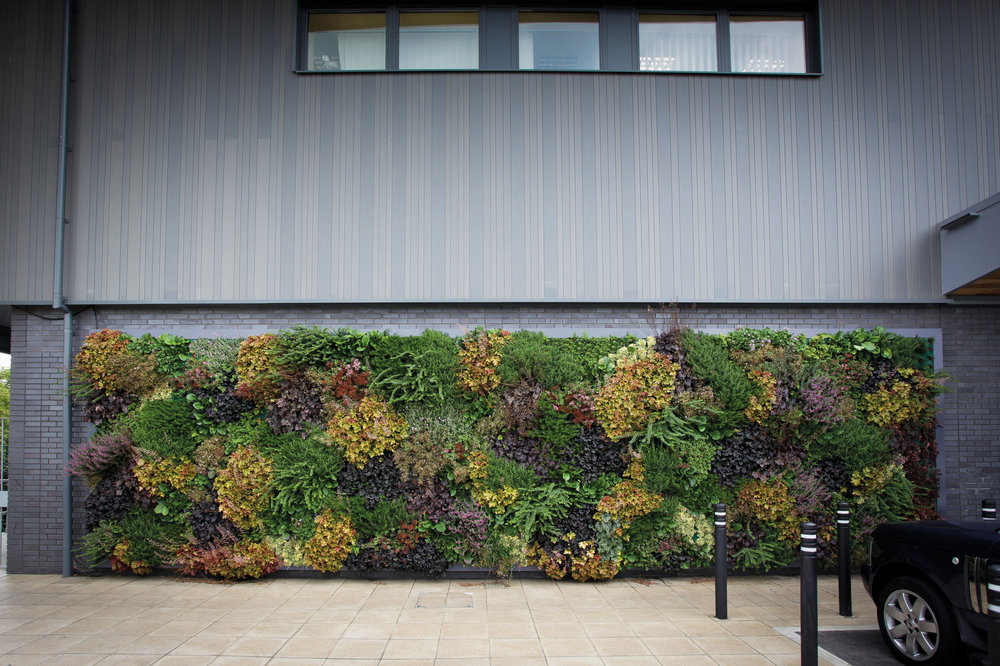 Living Wall for Outdoor Building