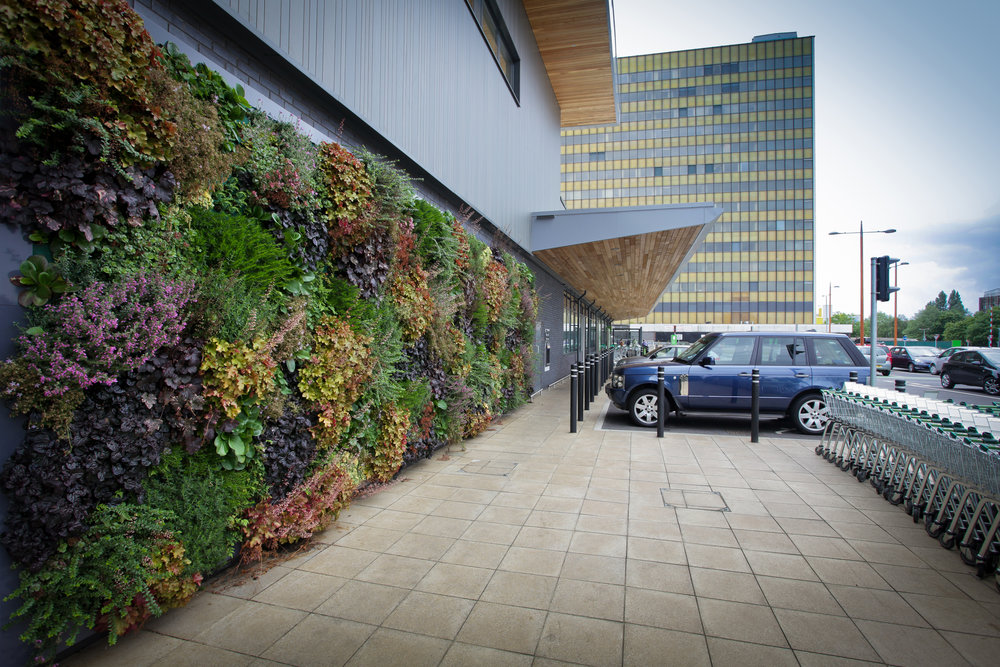 Vertical garden on building wall