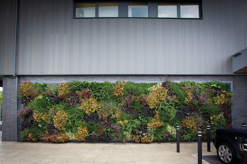 Outdoor green wall design by Suite Plants in Berkshire, England