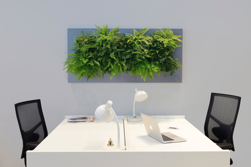 Living wall art for the modern office