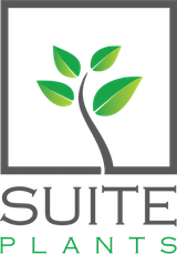 Suite Plants - Living Wall Systems