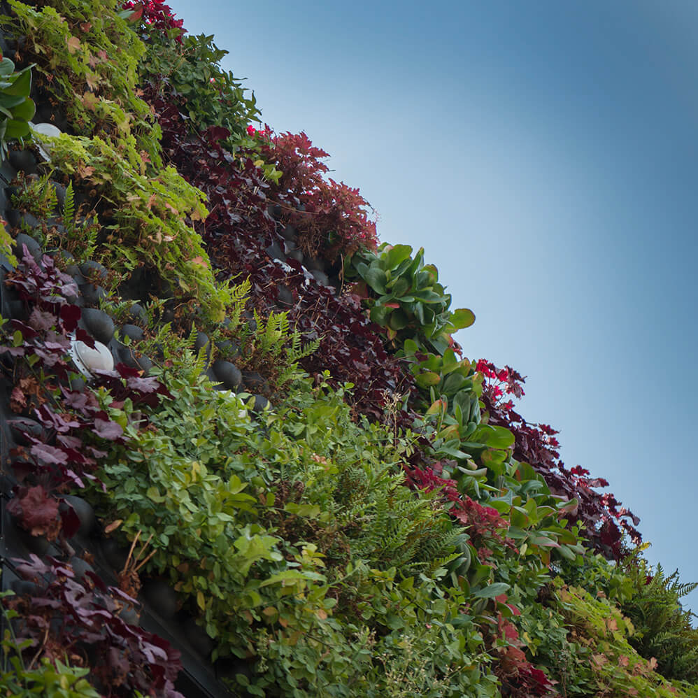 Closeup of modular living wall