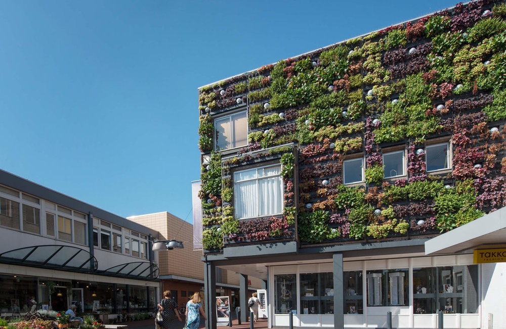 Exterior living wall on building by Suite Plants.
