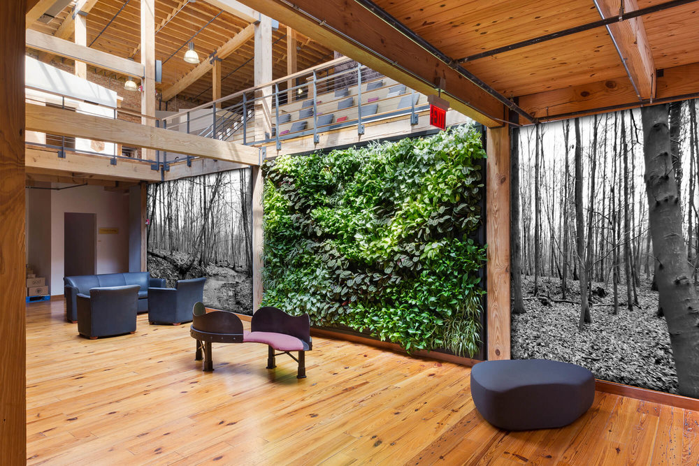 Indoor Green Wall by Suite Plants - Durham, North Carolina