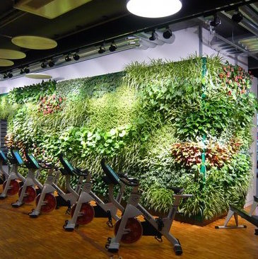Indoor Living Wall for Fitness Center in Munich, Germany