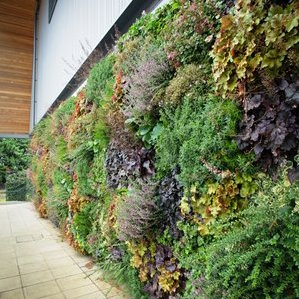 Outdoor Plant Wall in Bracknell - Berkshire, England