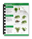 Indoor Plant Guide