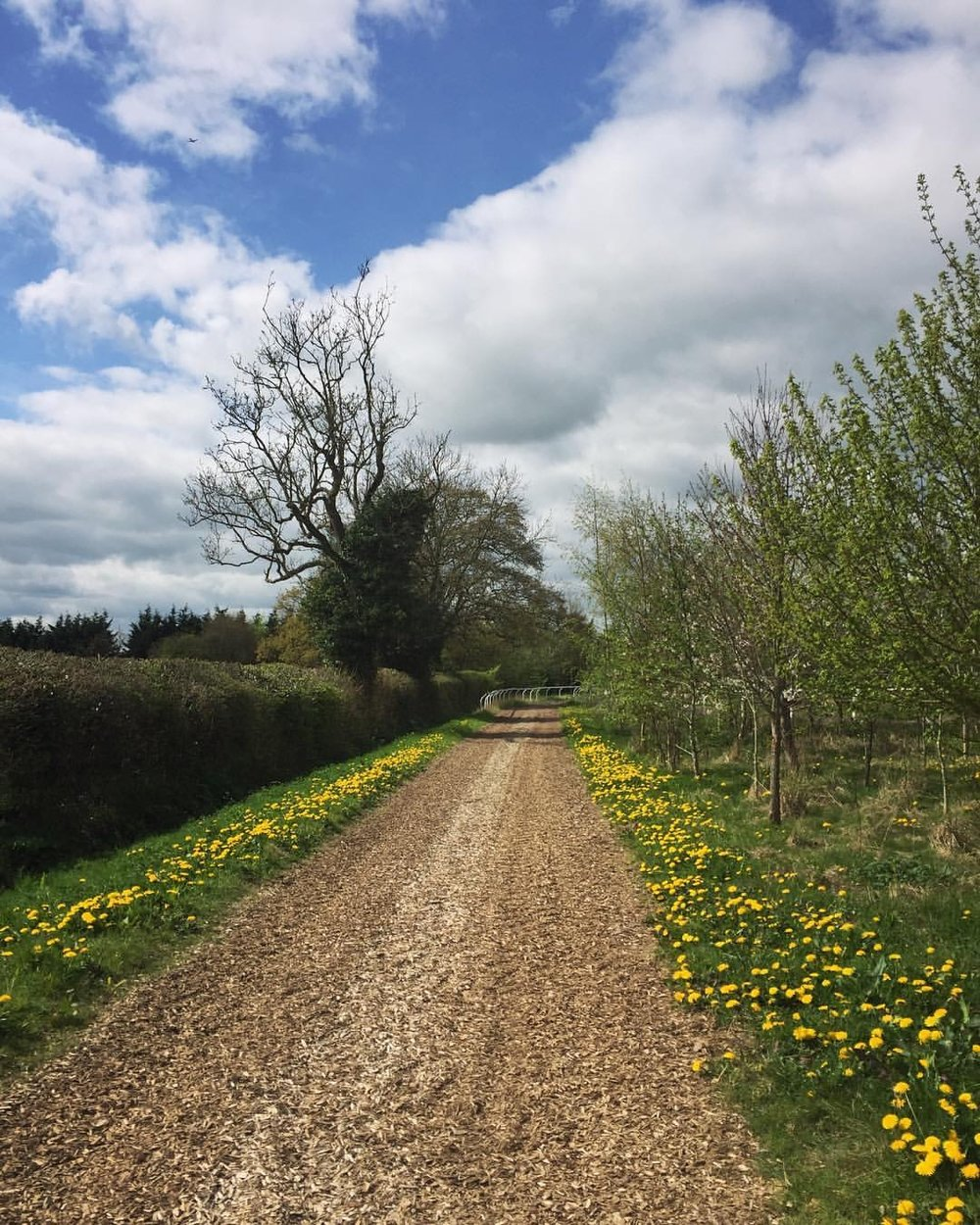 flowers and path.JPG