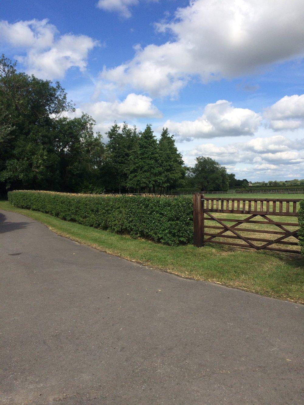 field and gate.JPG