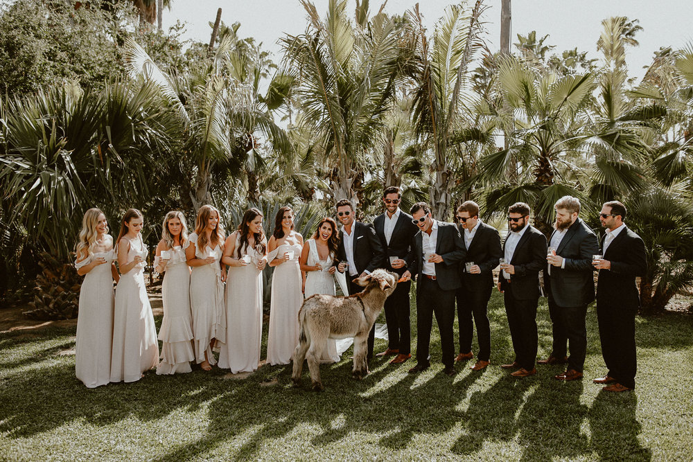 Mexico Wedding at ACRE Baja - Everyday Pursuits x Gina + Ryan Photography - featuring Donkey