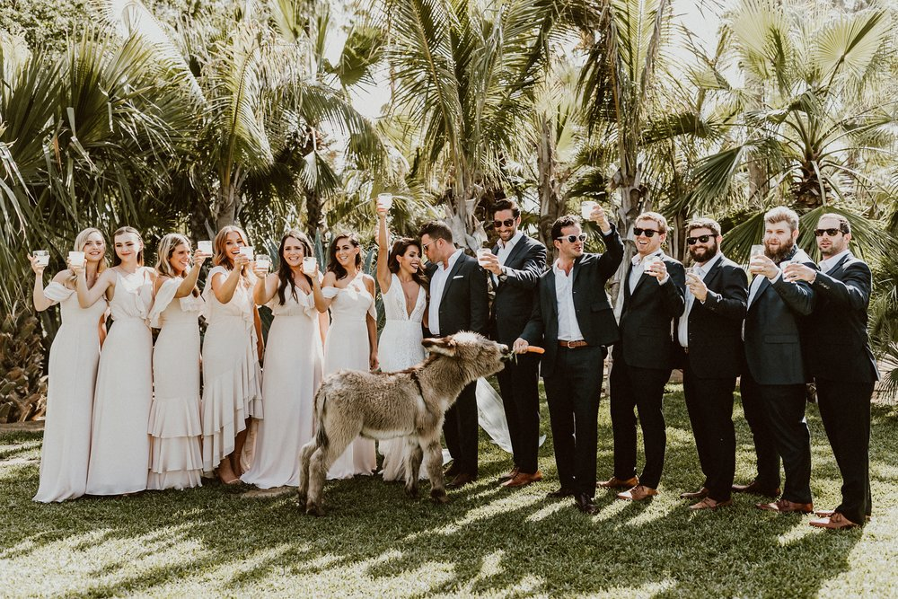Bridal Party with Tequila + Baby Donkey - ACRE Baja Wedding