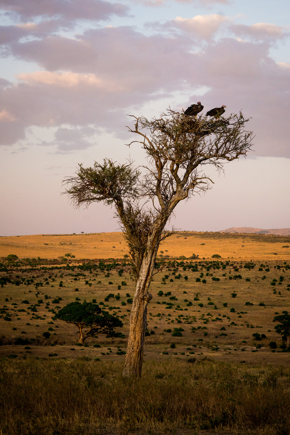 Maasai Mara at Sunset Ph. Dave Krugman