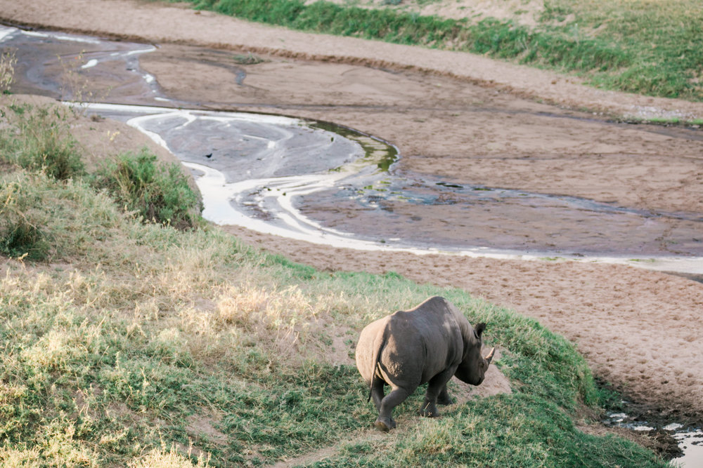 Rhino in the Maasai Mara, Kenya Ph. Valorie Darling
