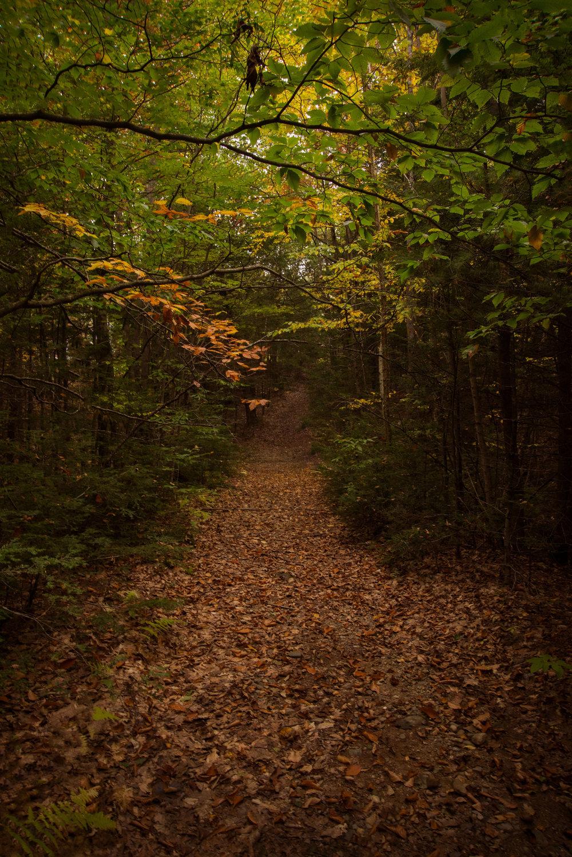 Rock Ridge (Steve Thomas) 2.jpg