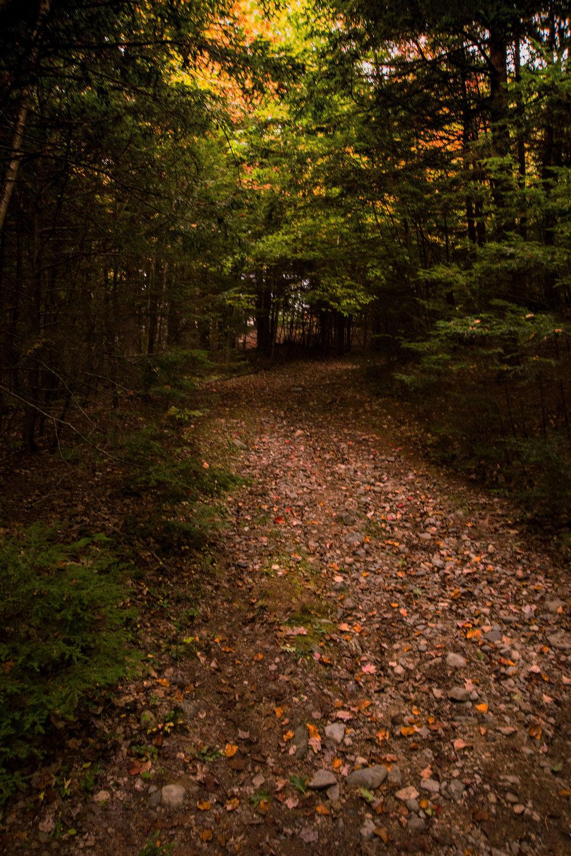 Rock Ridge (Steve Thomas) 1.jpg