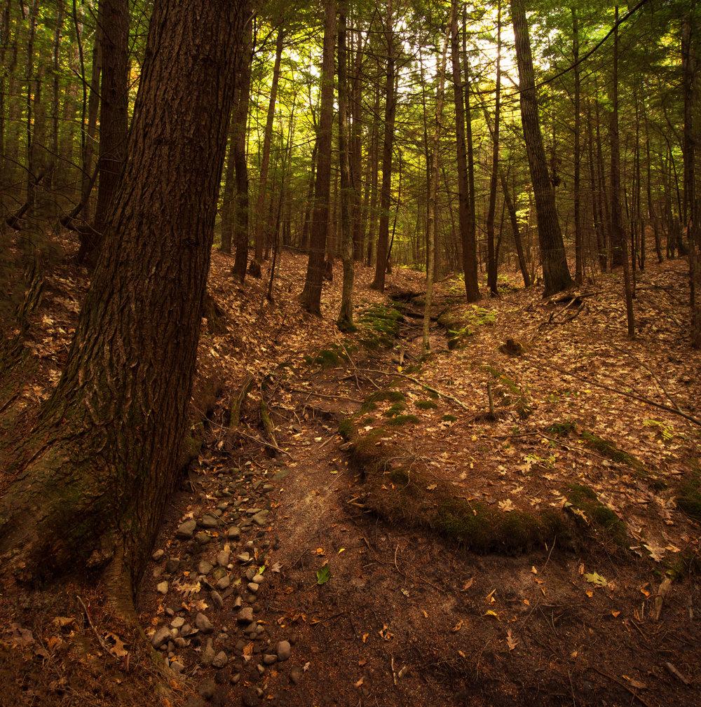 Rock Ridge (Steve Thomas) 4.jpg