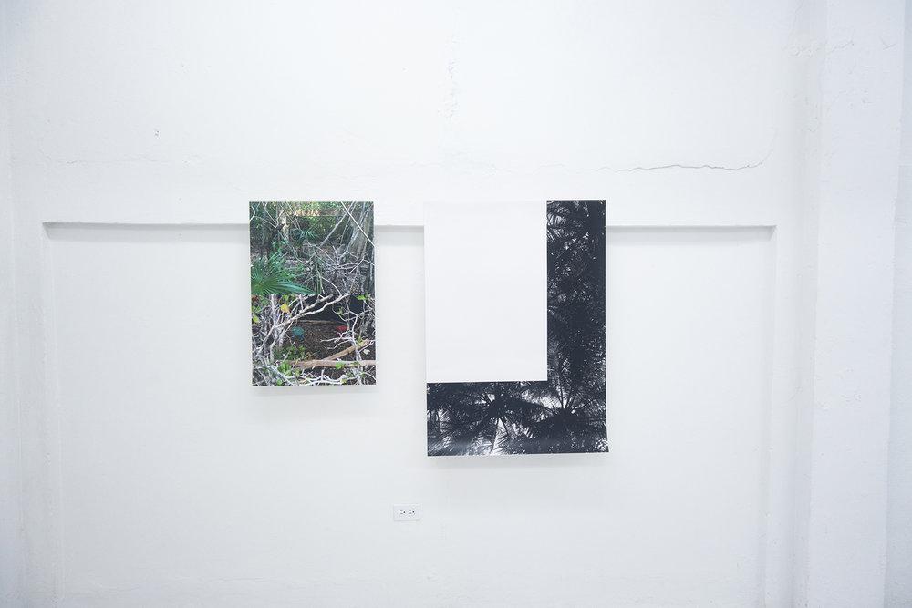 "Pablo Guardiola / Untitled (Afuera bosque), 2016 / Digital c- print/ 20""x30""/ Untitled (Afuera palmas), 2016 / Digital c- print / 30'' x 42''"