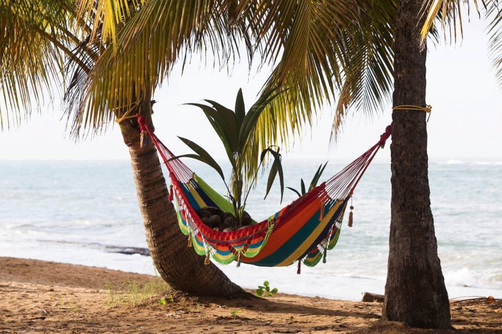 Tiempo Tropical,2016 / Hamaca artesanal, cocos podridos, cocos germinados / Dimensiones Variables / Loiza