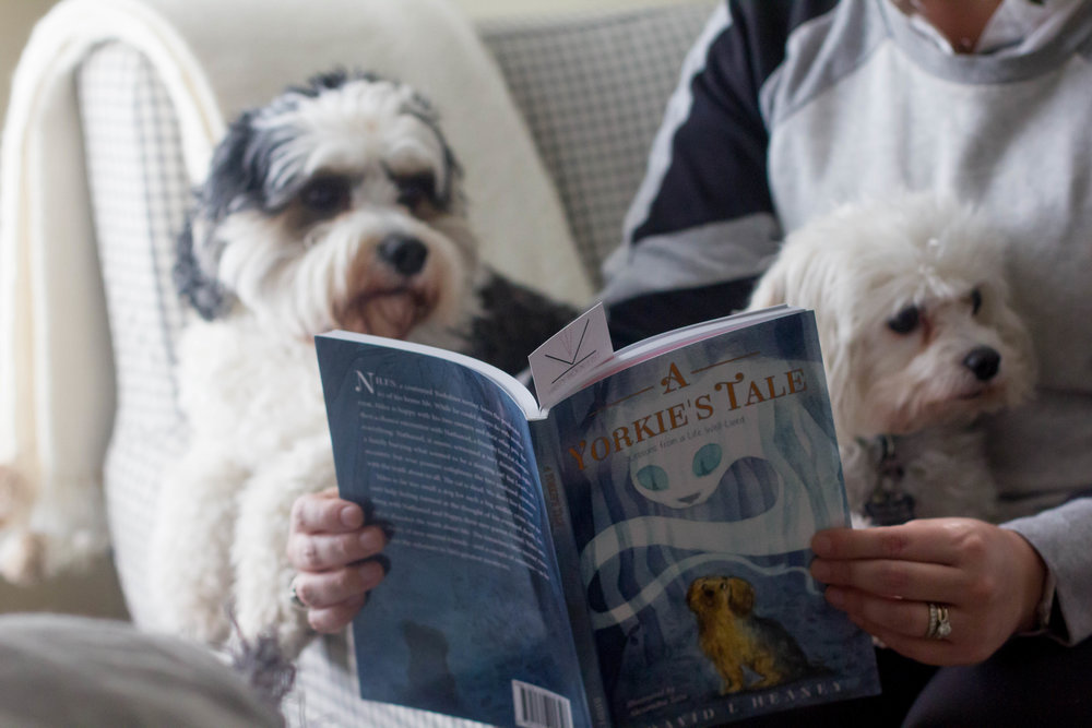Reading A Yorkie's Tale by David Heaney at home with the dogs