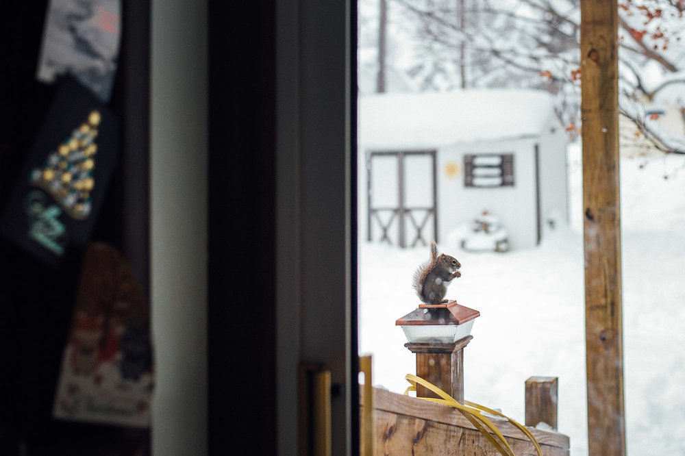 squirrel-eating-on-lamp-post-outside-back-door-in-the-snow-by-erie-family-photographer-anna-margaret-photography.jpg