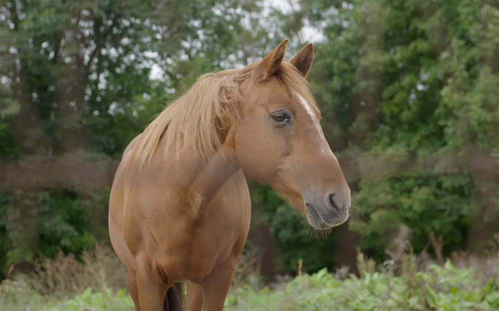 UpReach helps people of all ages and abilities heal through the therapeutic power of horses. - We're proud to support this organization that does so much for so many.