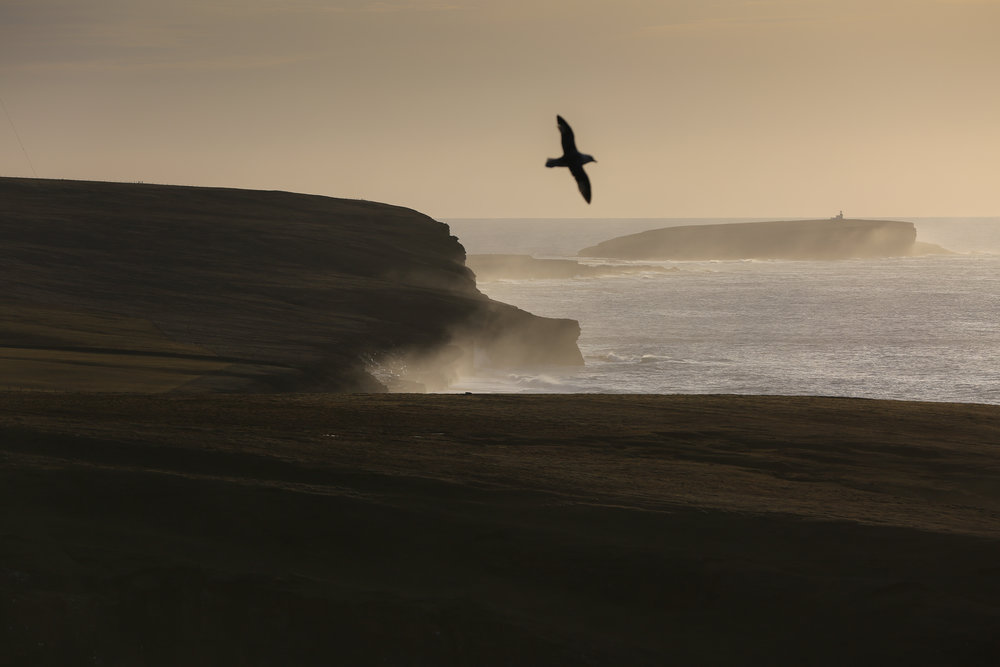 The dramatic coastline of the north west Orkney mainland, looking south towards the Brough of Birsay