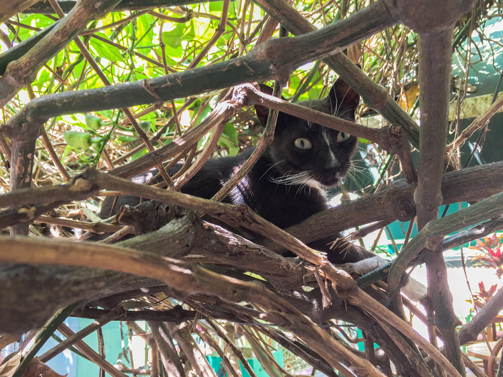 One aloof kitty hanging out above us in the vines