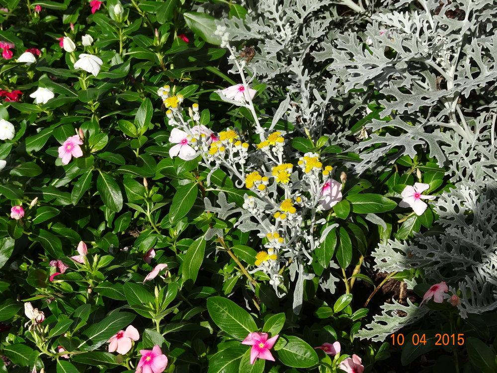 Garden Millis MA