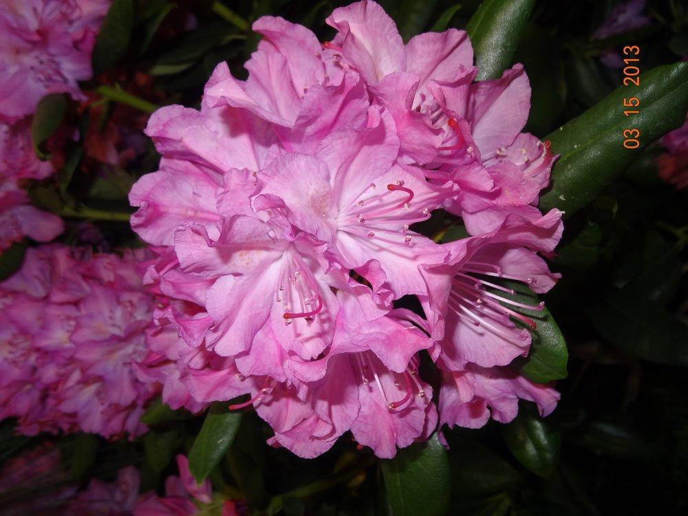 Garden Dover MA