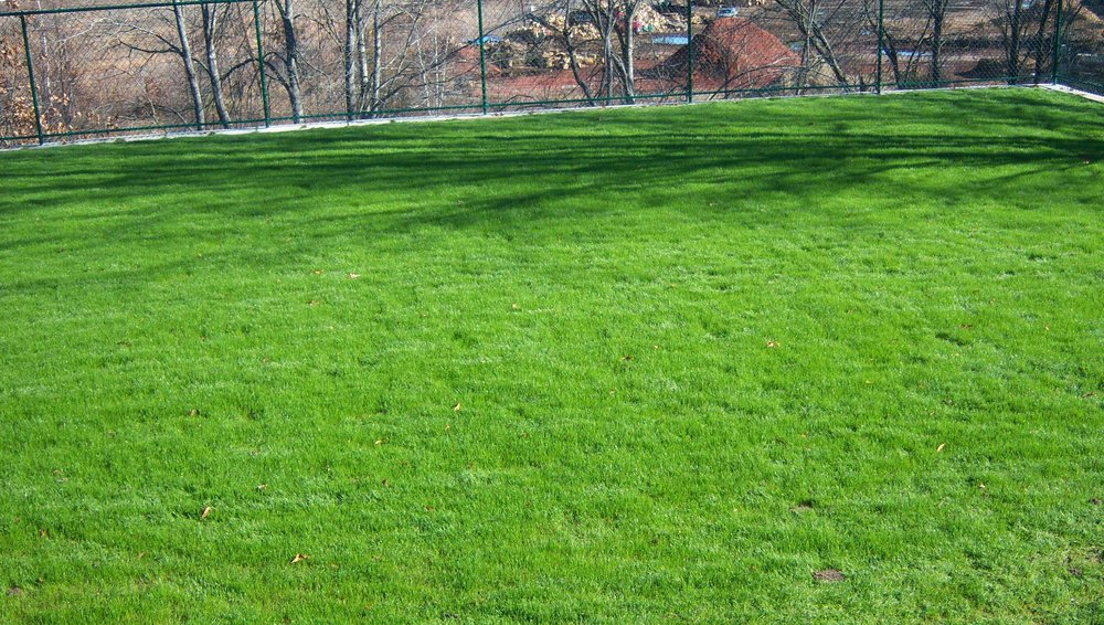 Professional landscape maintenance with lawn care in Newton MA