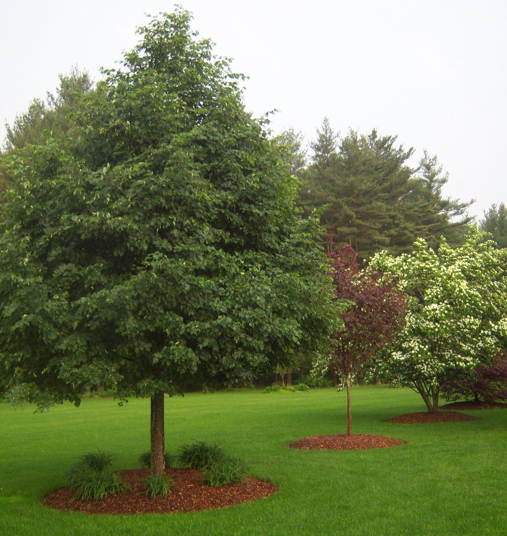 Commercial landscape maintenance services in Millis; MA