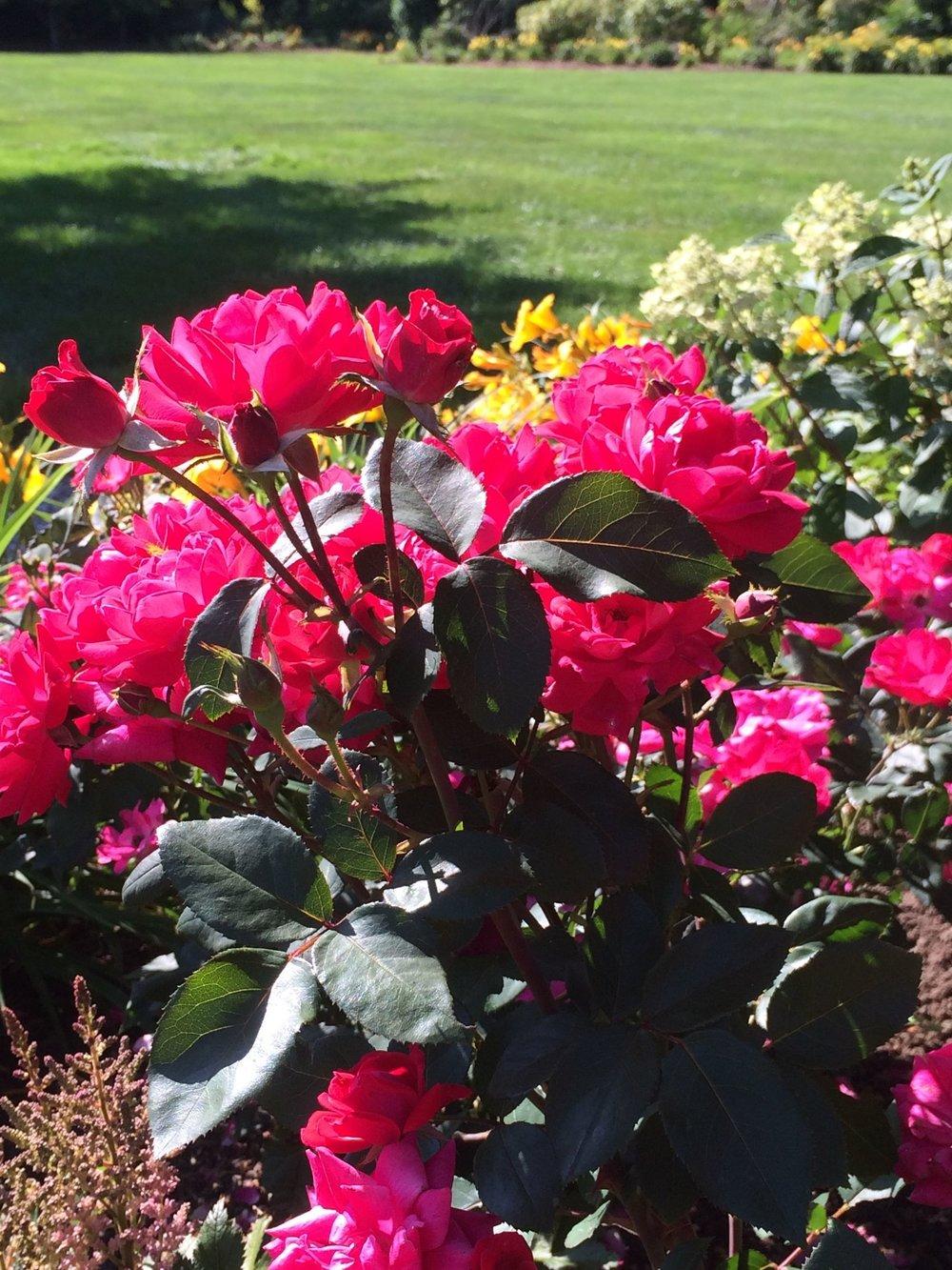 Garden Sharon MA