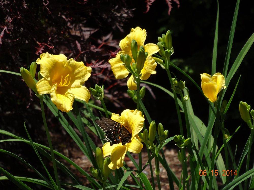 Garden Wrentham MA