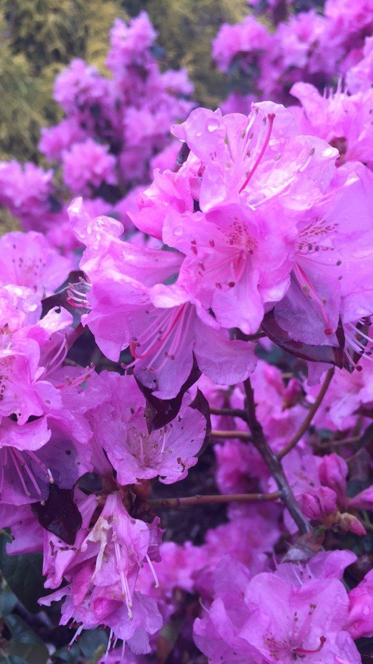 Garden Bellingham MA