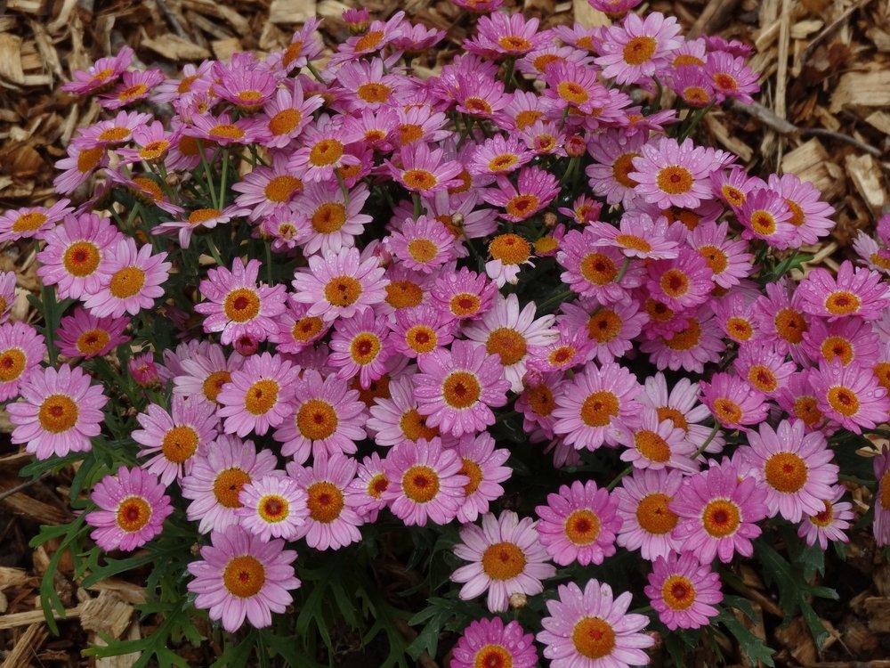 Garden Sudbury MA