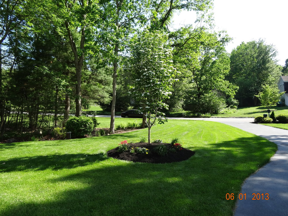 Want to Improve Your Front Entrance with Trees and Shrubs? Sign Up for a Landscape Maintenance Service in Sudbury, MA