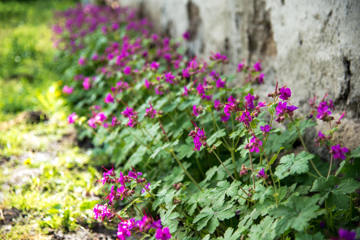 Landscape Maintenance Perennials And Annuals You Can Grow In The